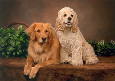 2007 The True Owners - Molson and Lou - Our Humans are Lori and Nino